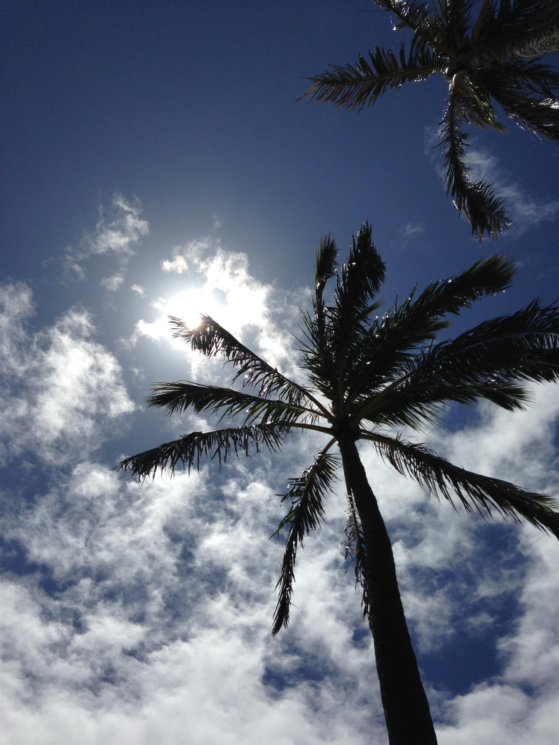 palm tree outdoors