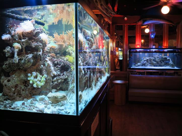giant fish tank with fish swimming around
