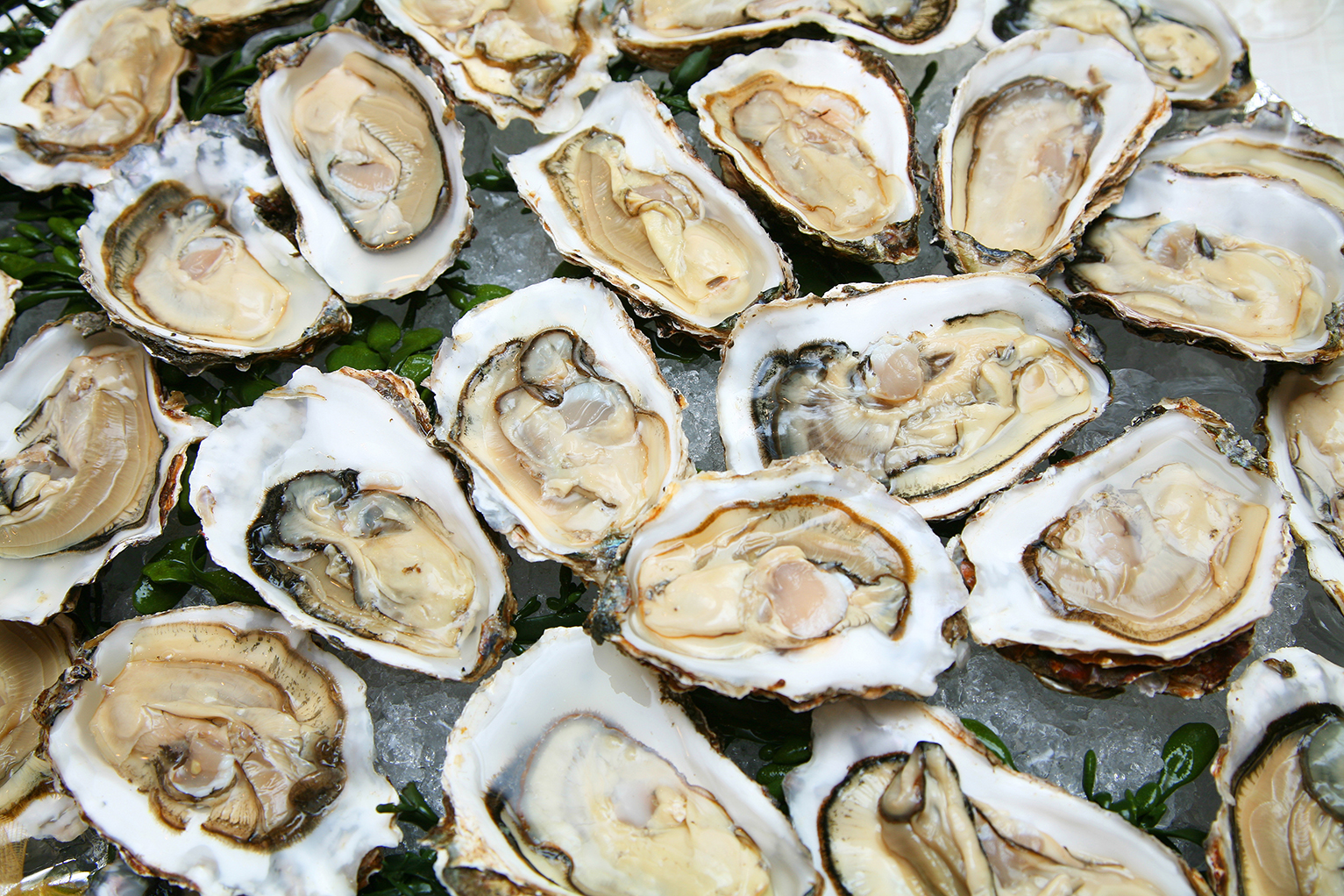 raw oysters on the half shell over ice