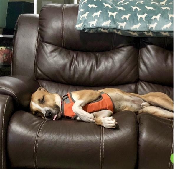 Dog laying on the couch