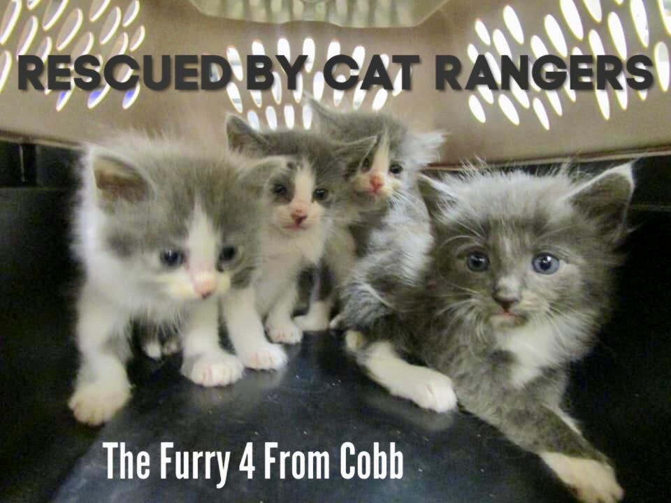 The Furry 4 From Cobb - Cat Rangers
