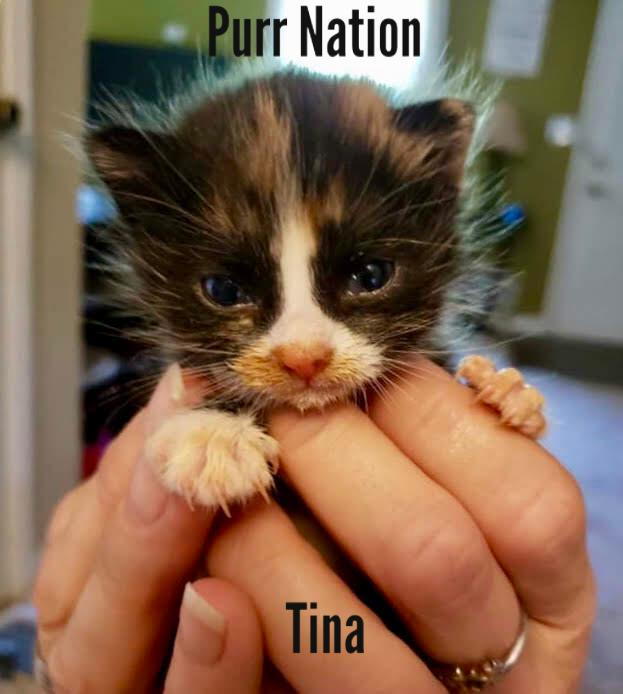 Tina - Purr Nation