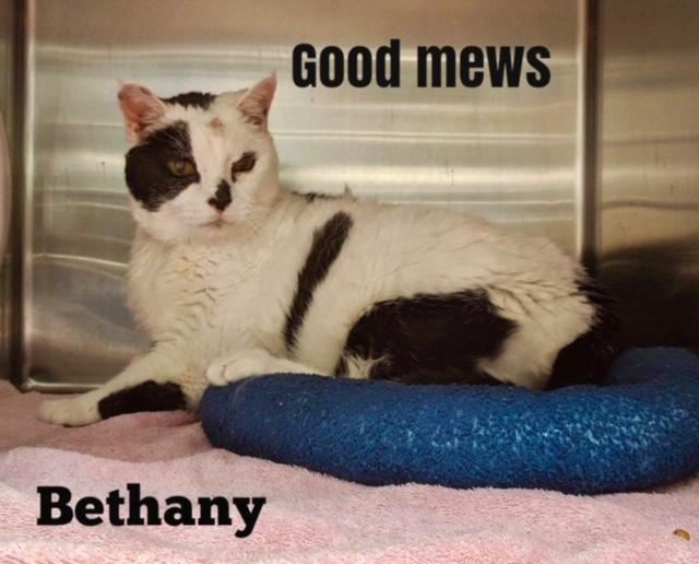 Bethany - Good Mews
