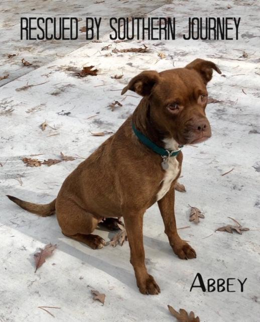 Abbey - Rescued by Southern Journey