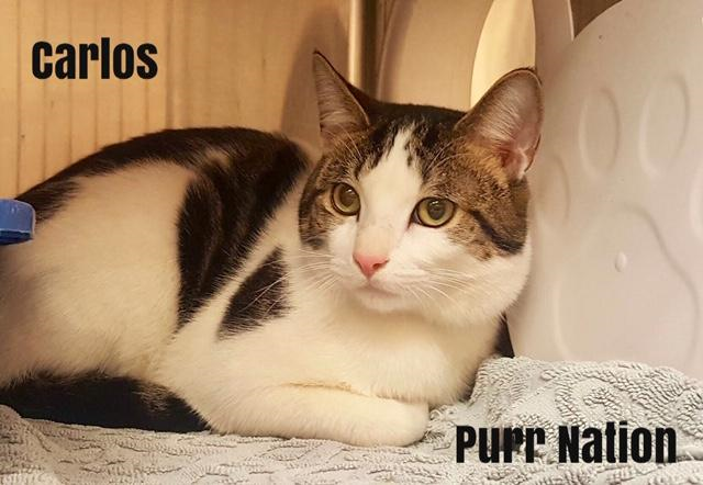 Carlos - Purr Nation
