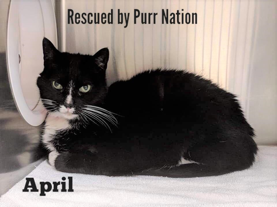 April - Purr Nation