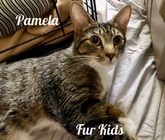 Pamela Fur Kids - seated cat