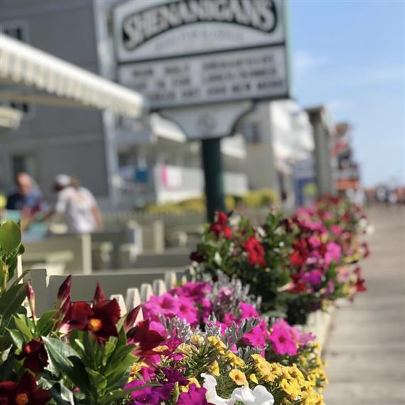 Flowers bloom on Shenanigan's front porch