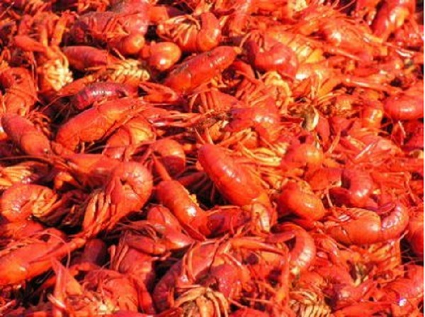 dozens of crawfish