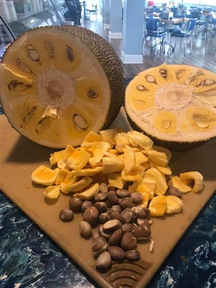 raw jackfruit sliced in half with its chunks and seeds laid out on cutting board