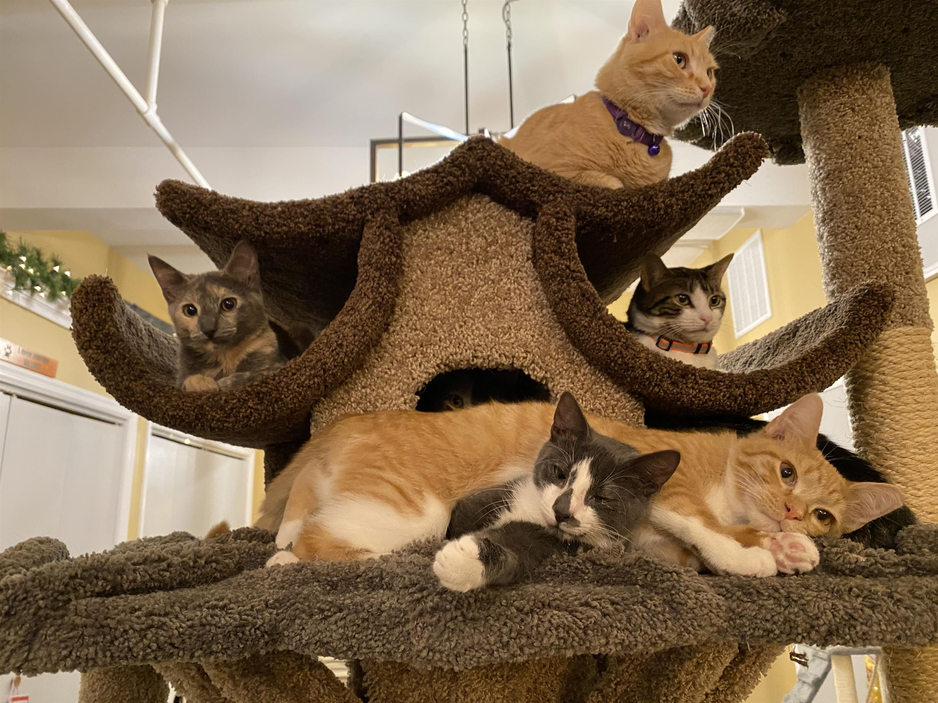 Cat tree with five cats all laying on it.