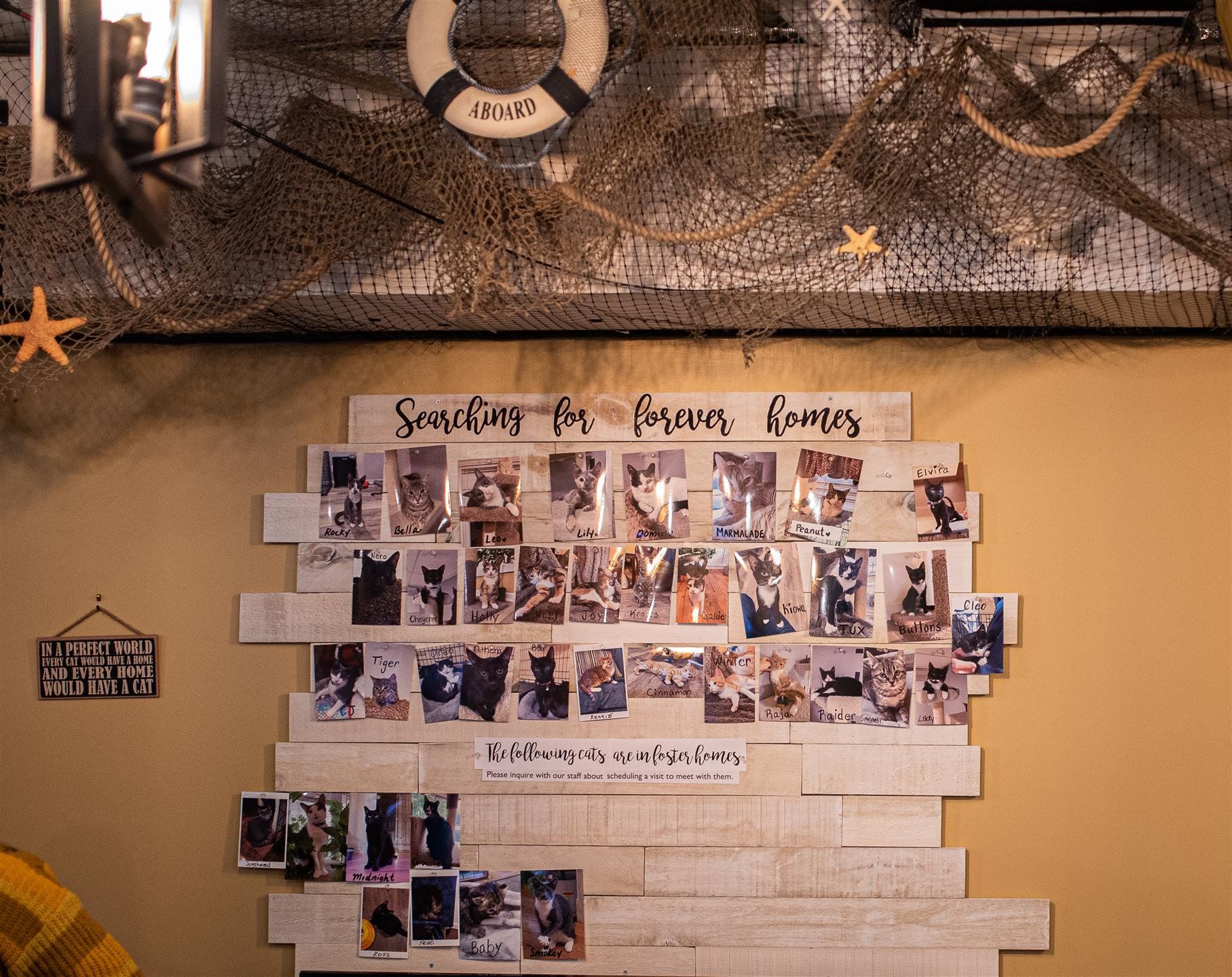 wall with photos of cats that are up for adoption