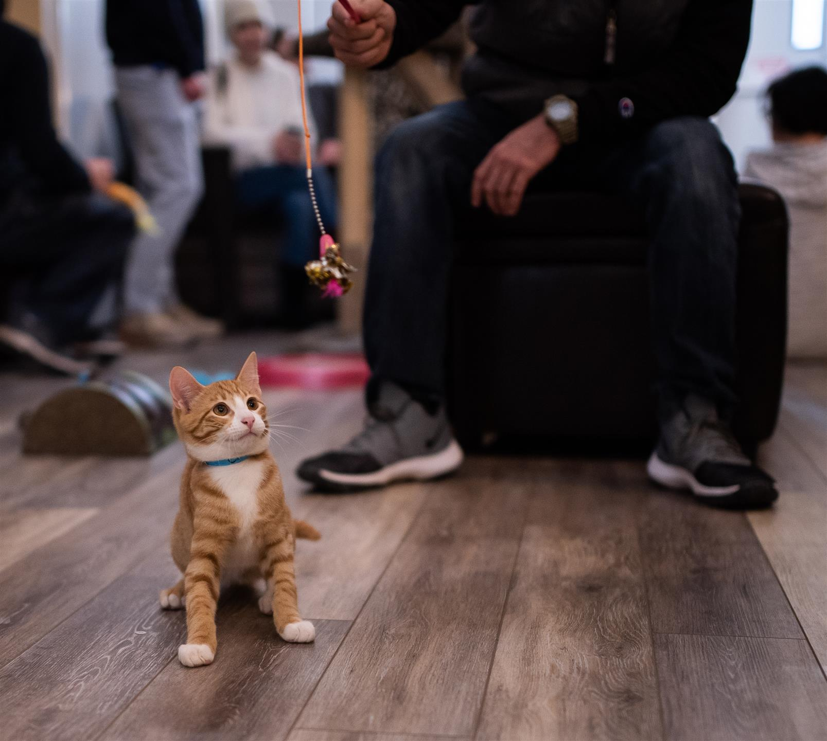 orange kitten looking at a string toy.