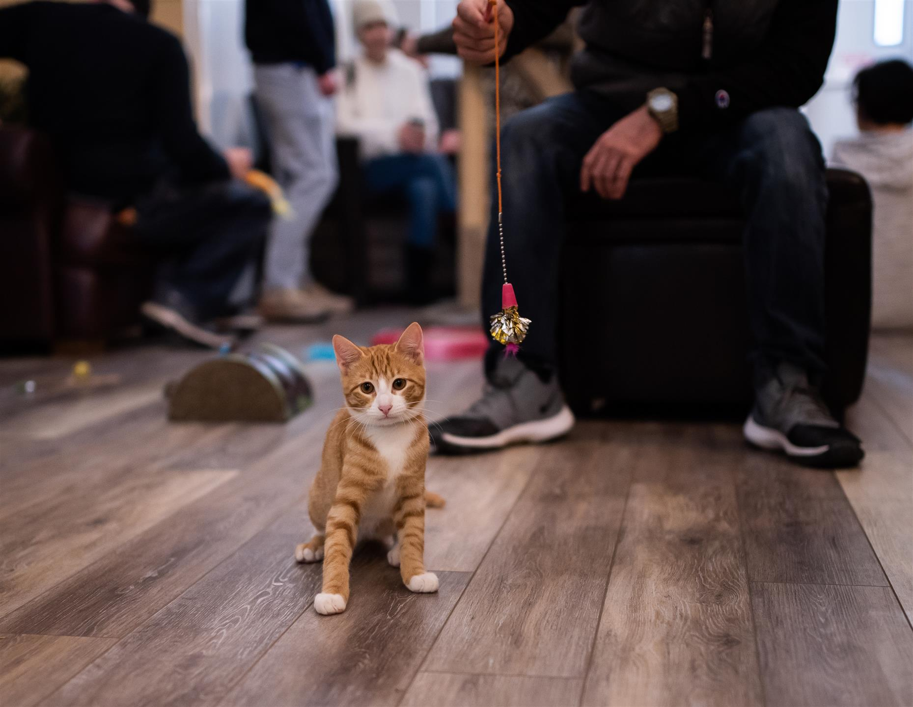 orange kitten looking at the camera with a string toy behind him.
