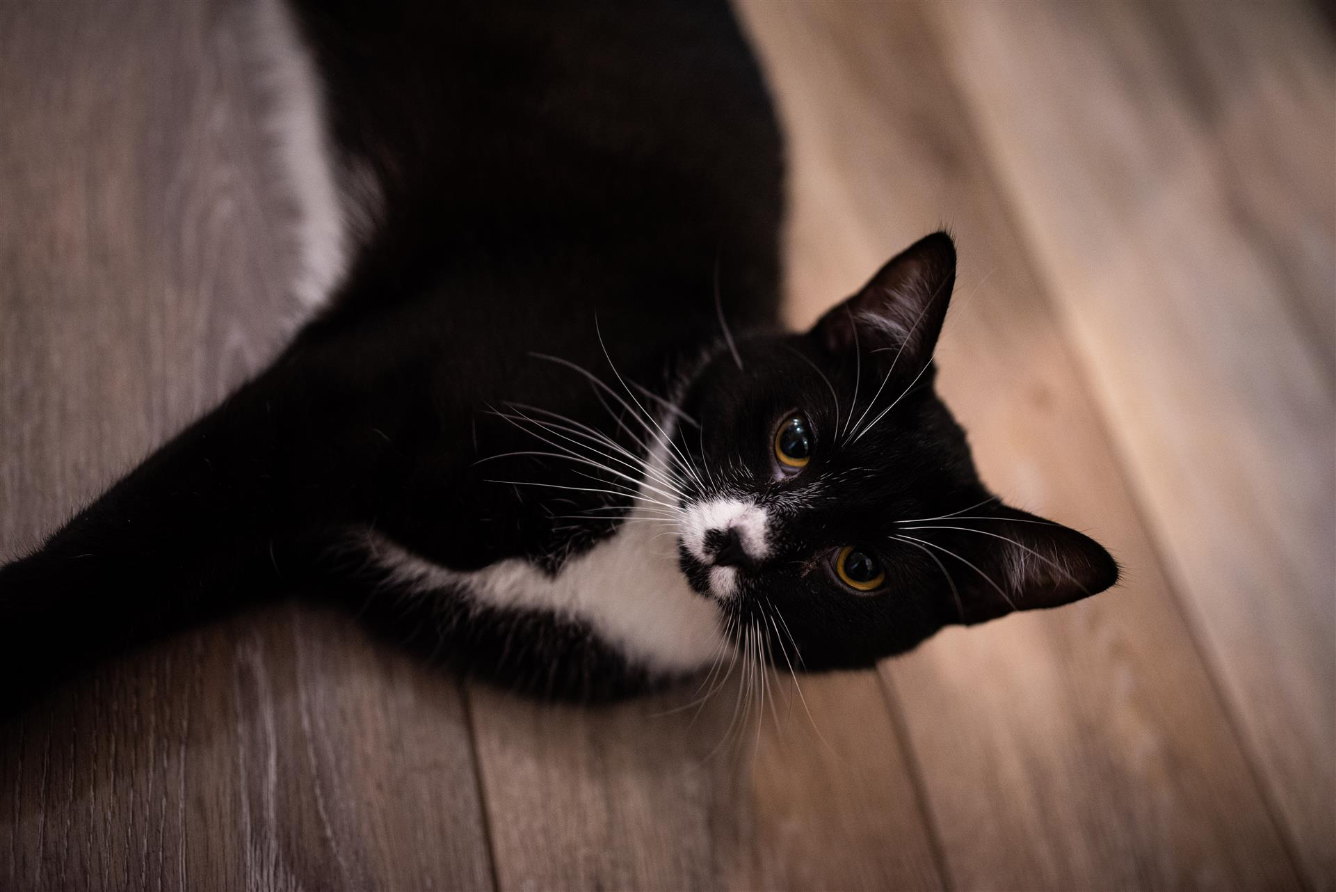 tuxedo cat laying on the ground
