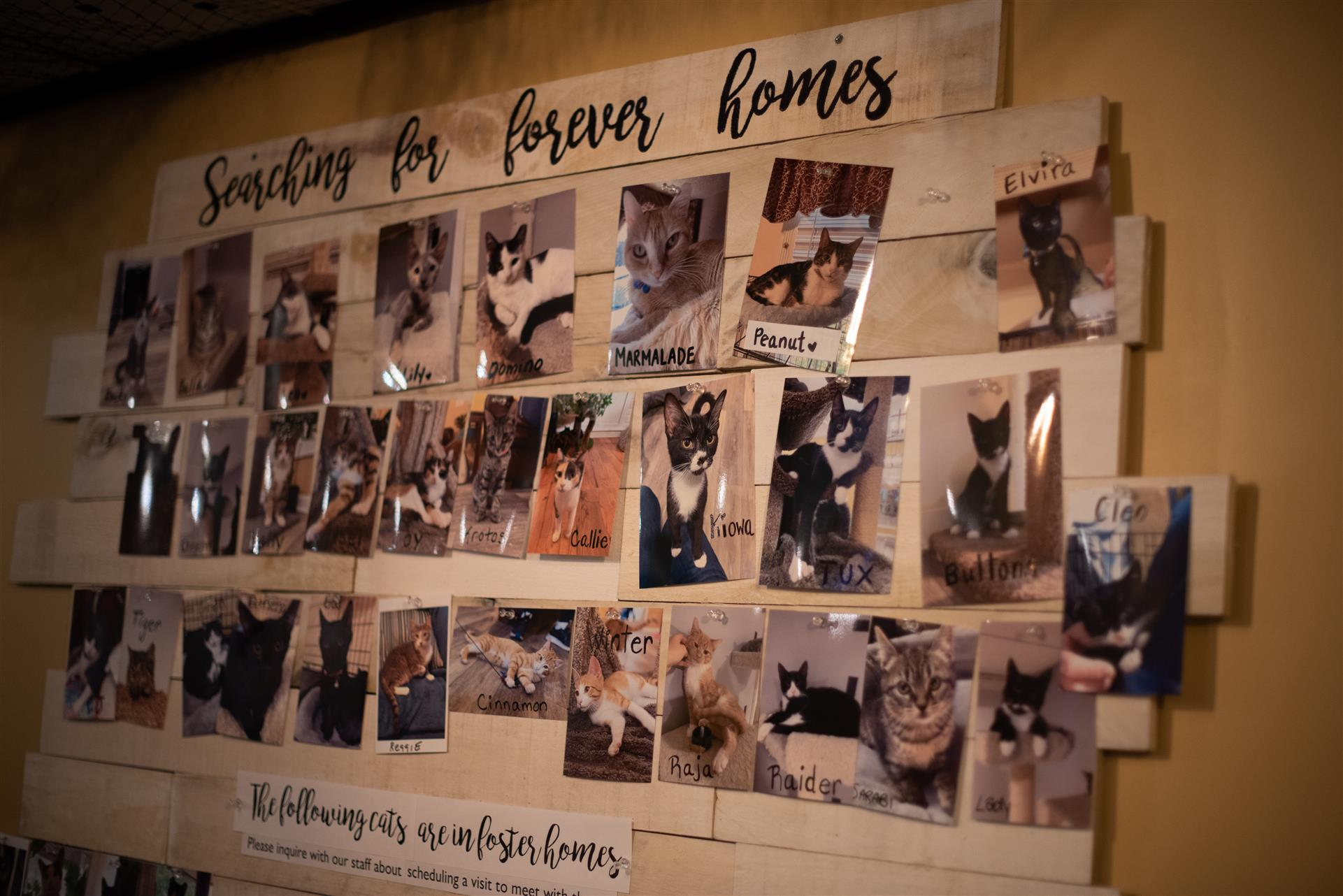 wall with photos of cats up for adoption