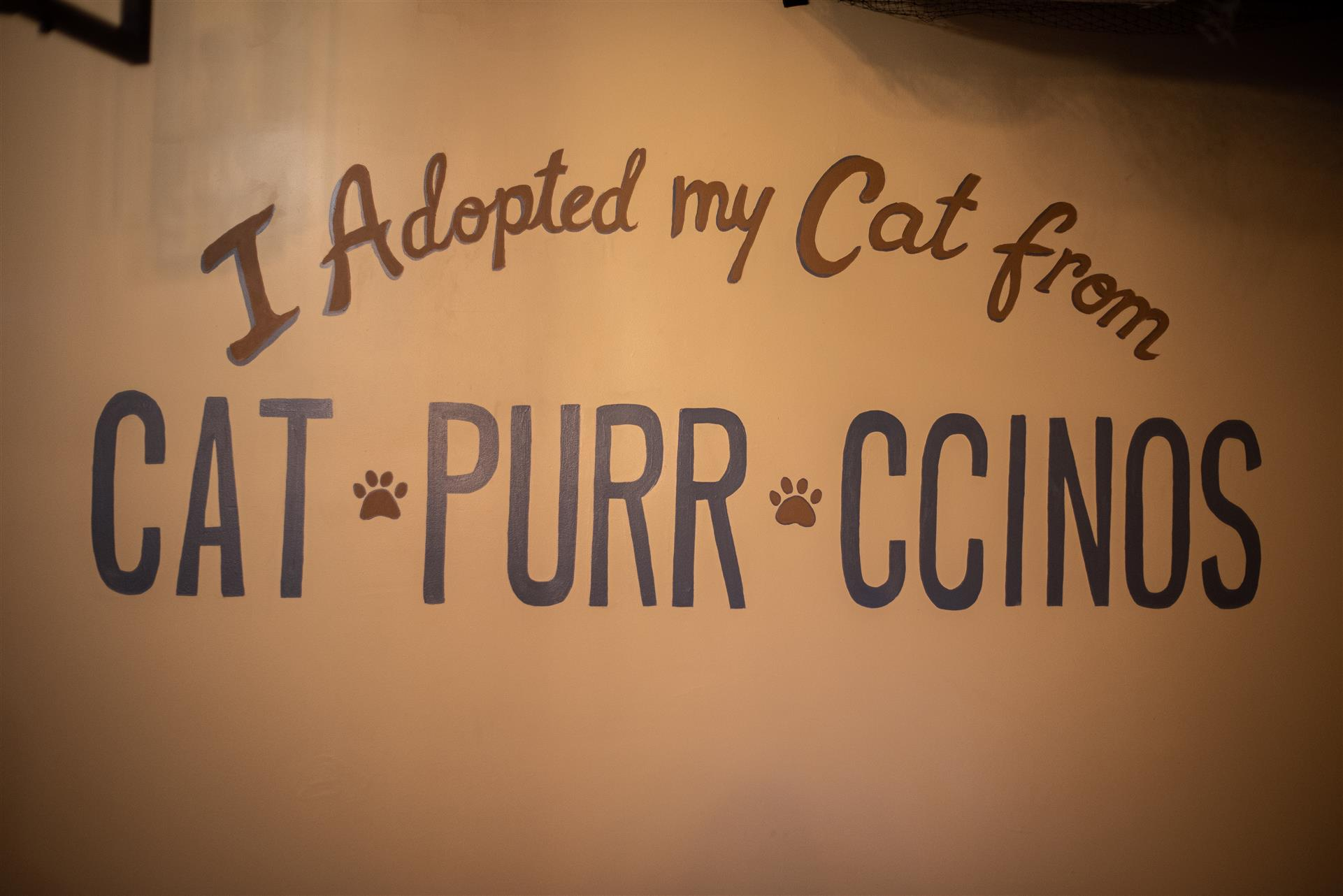 Wall painted 'I adopted my cats from Catpurrccinos.'