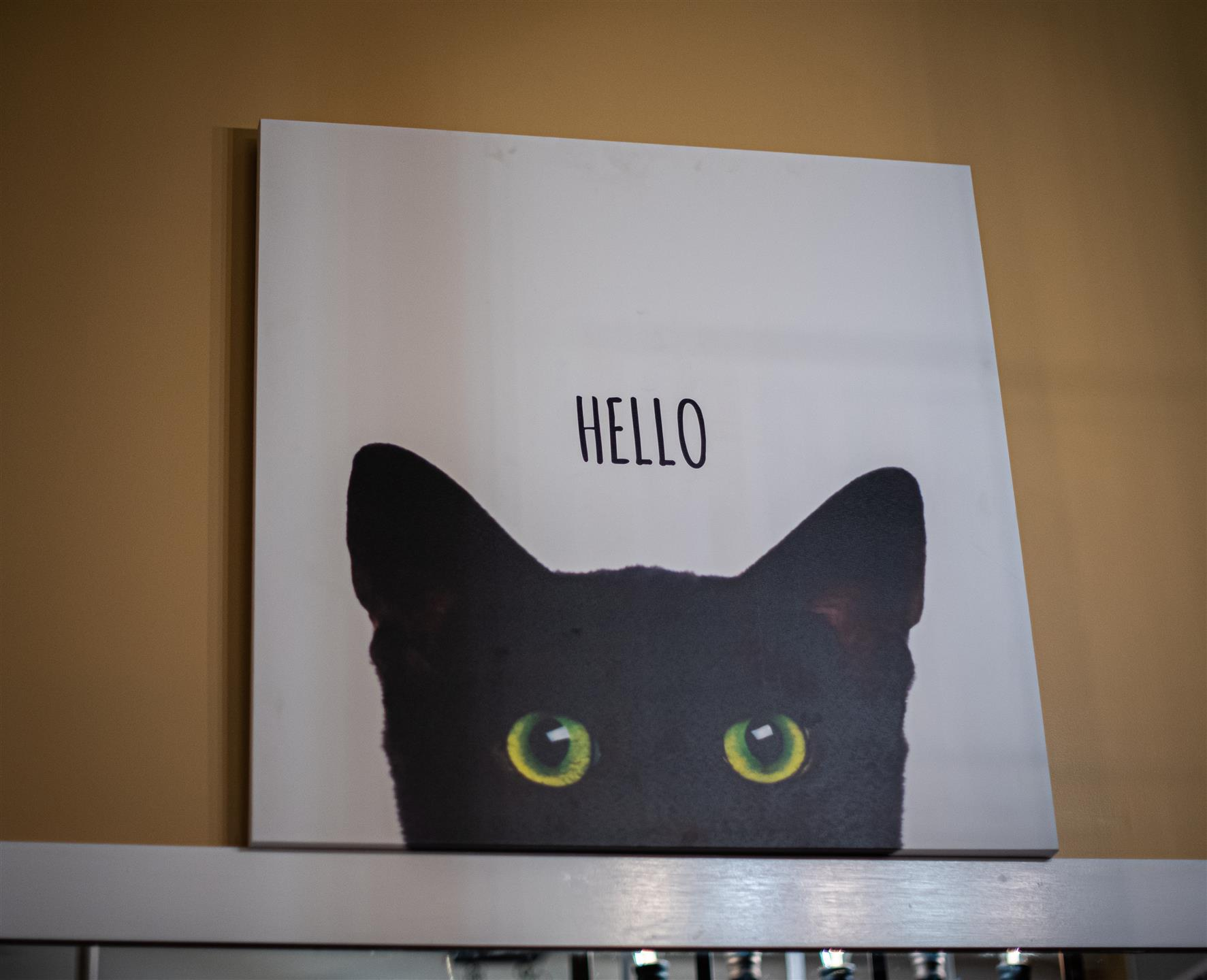 Canvas with black cat peering over edge stating HELLO