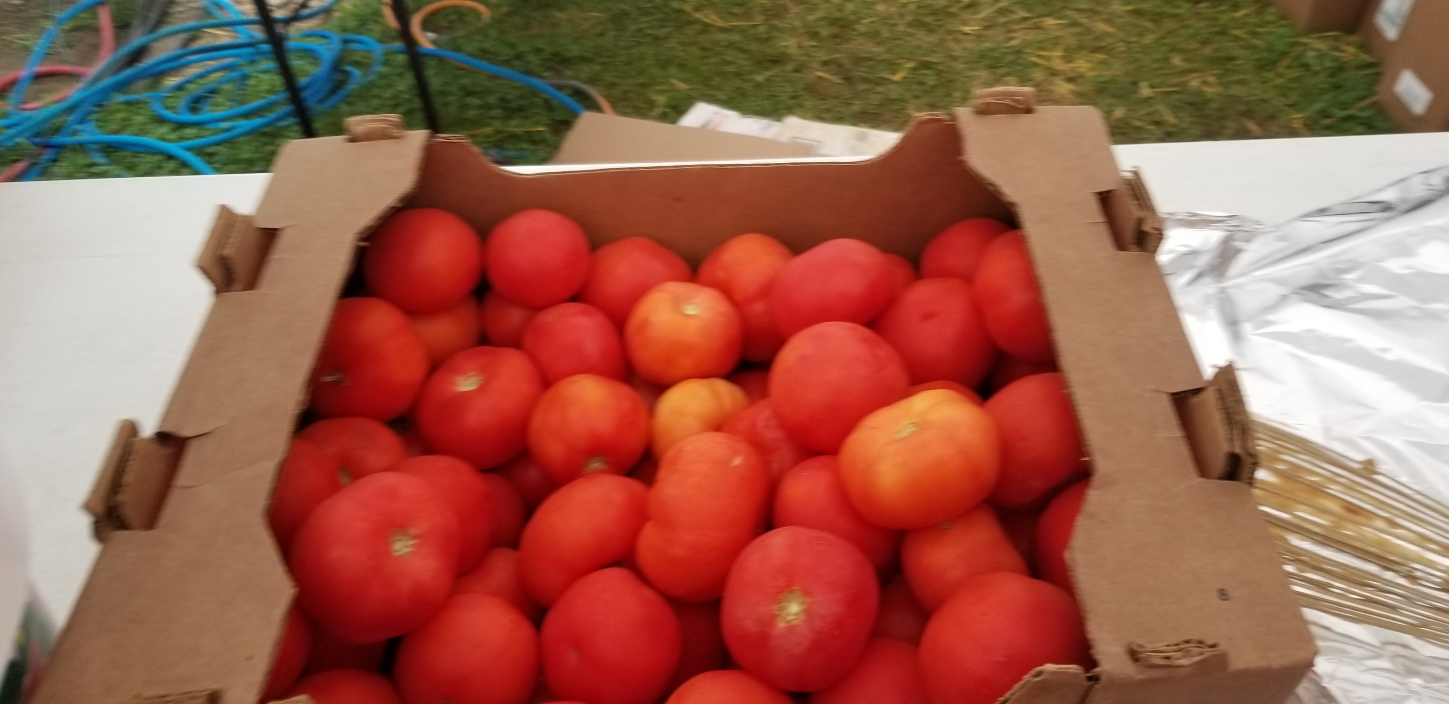 Tomatoes in box
