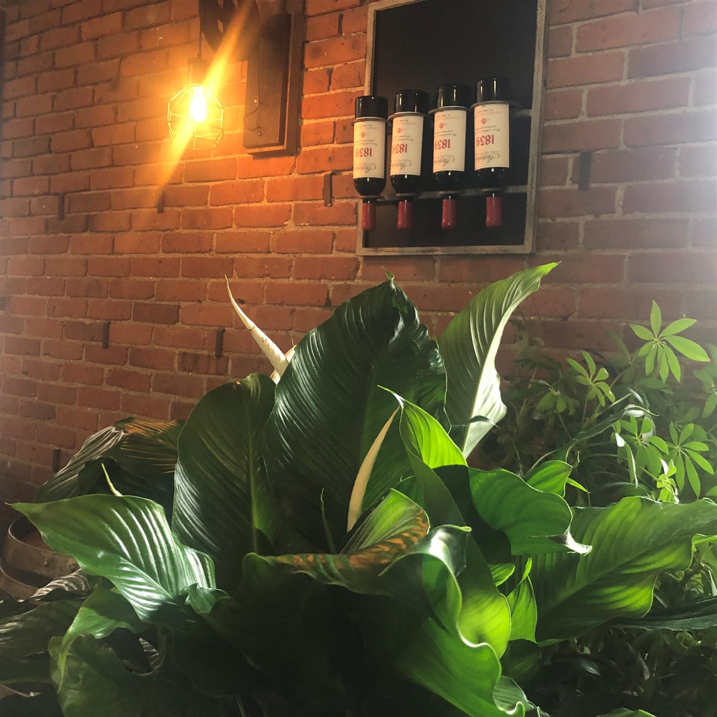 green plants infront of a brick wall and wine bottles hanging on the wall
