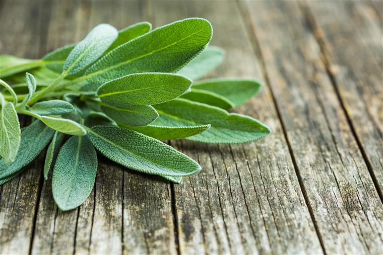 sage leaves on a wood table
