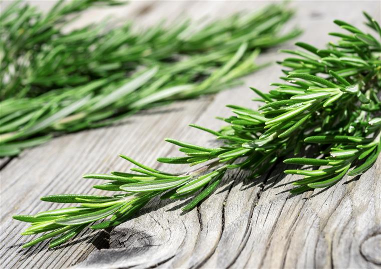 fresh rosemary on a wood table