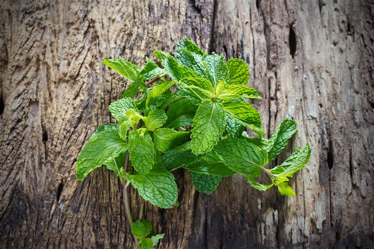 mint leaves on wood table