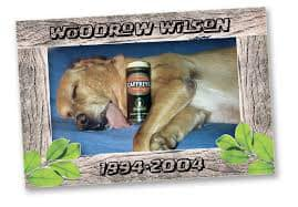Woodrow Wilson ​1994-2004. Dog sleeping on a bed with a can of beer.