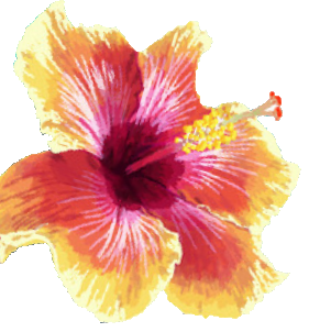 hibiscus flower graphic