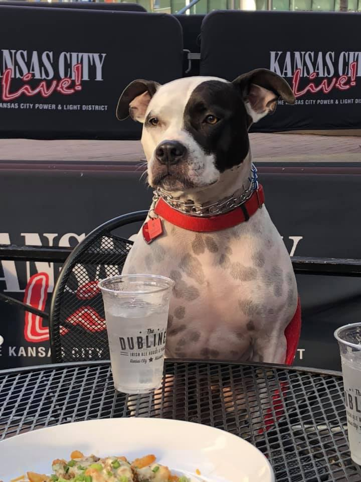 A dog sitting at the outside table with a glass of water