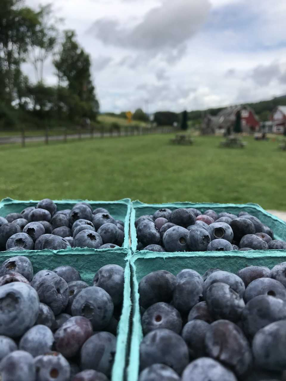 four cartons of blueberries in focus with the barn next door in the background.