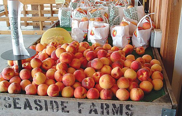 fresh picked apples on display inside the farmers market