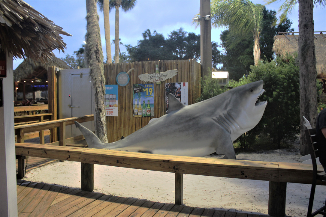 fake shark decoration
