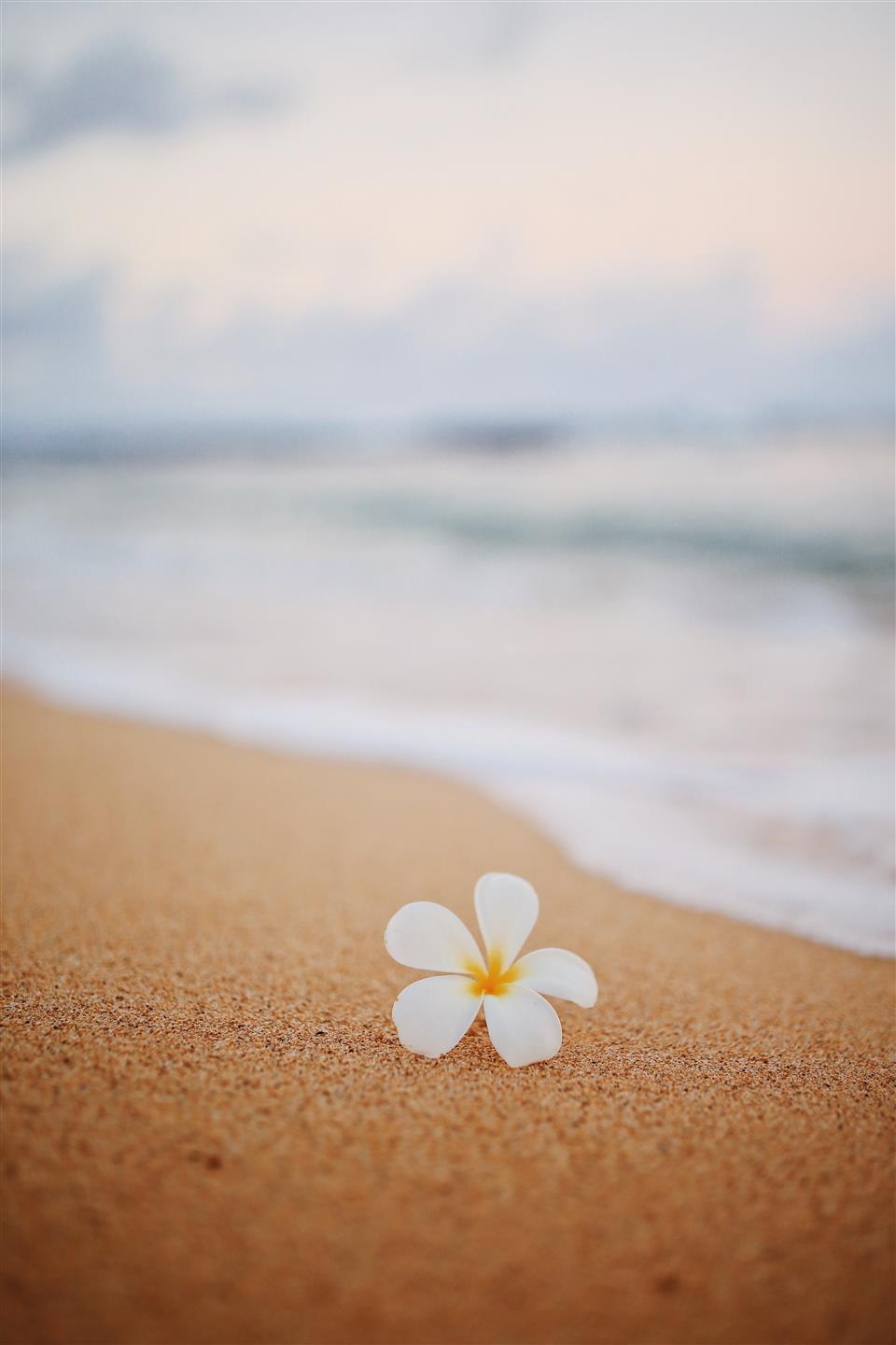 a single flower on the sand with a wave crashing