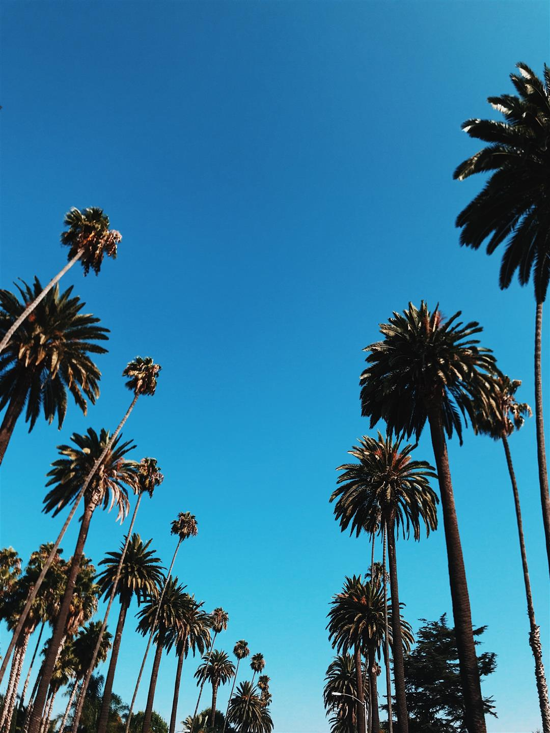shot of the palm trees in the blue sky