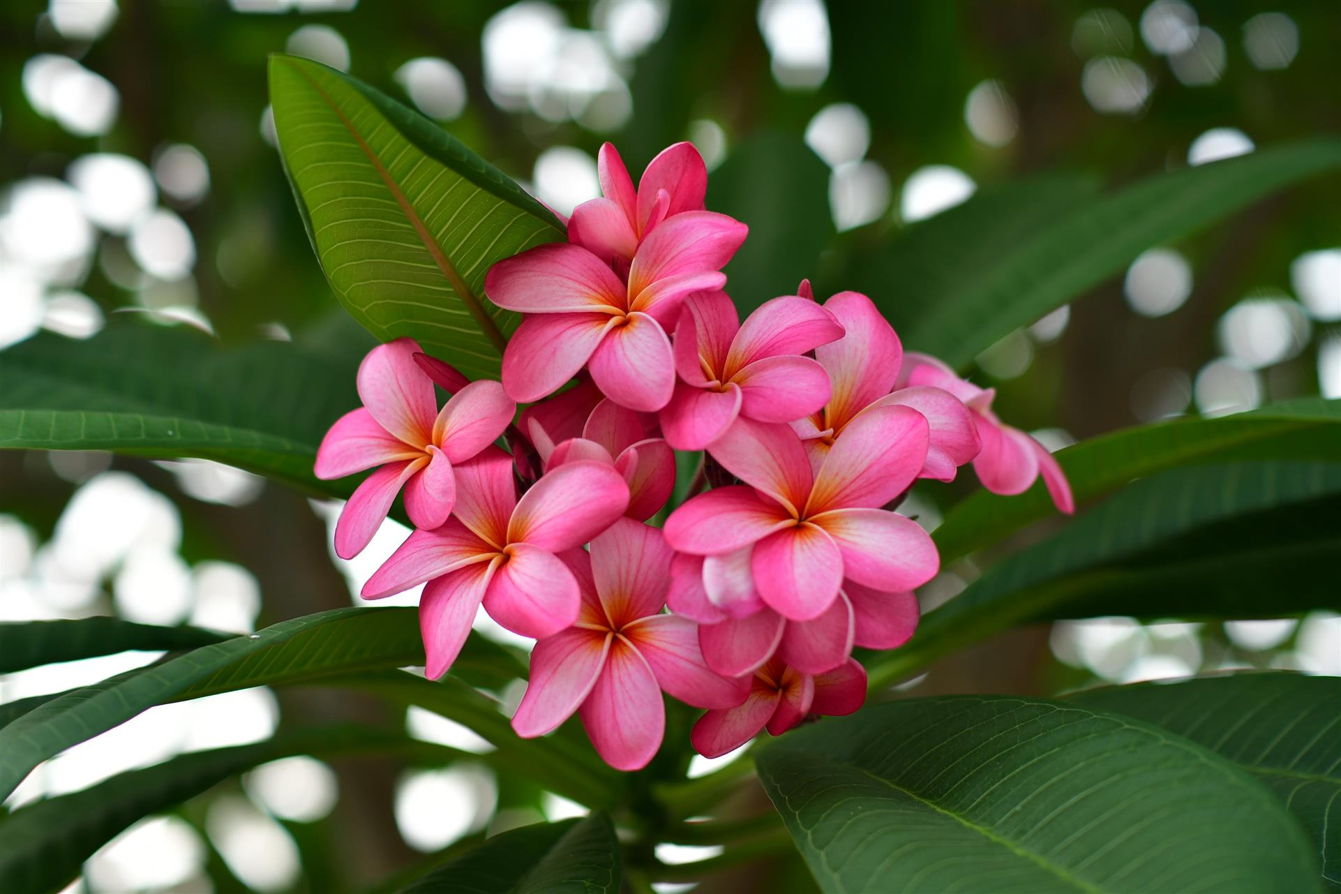 bundle of pink flowers with green leaves