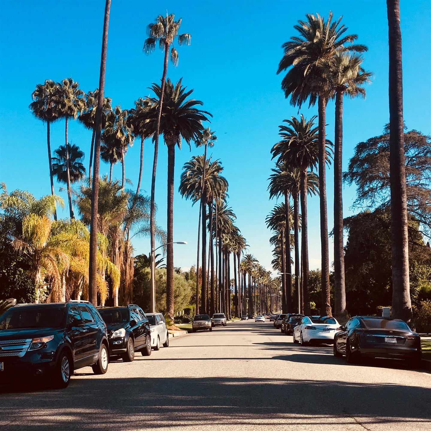 California street with palm trees lining the road