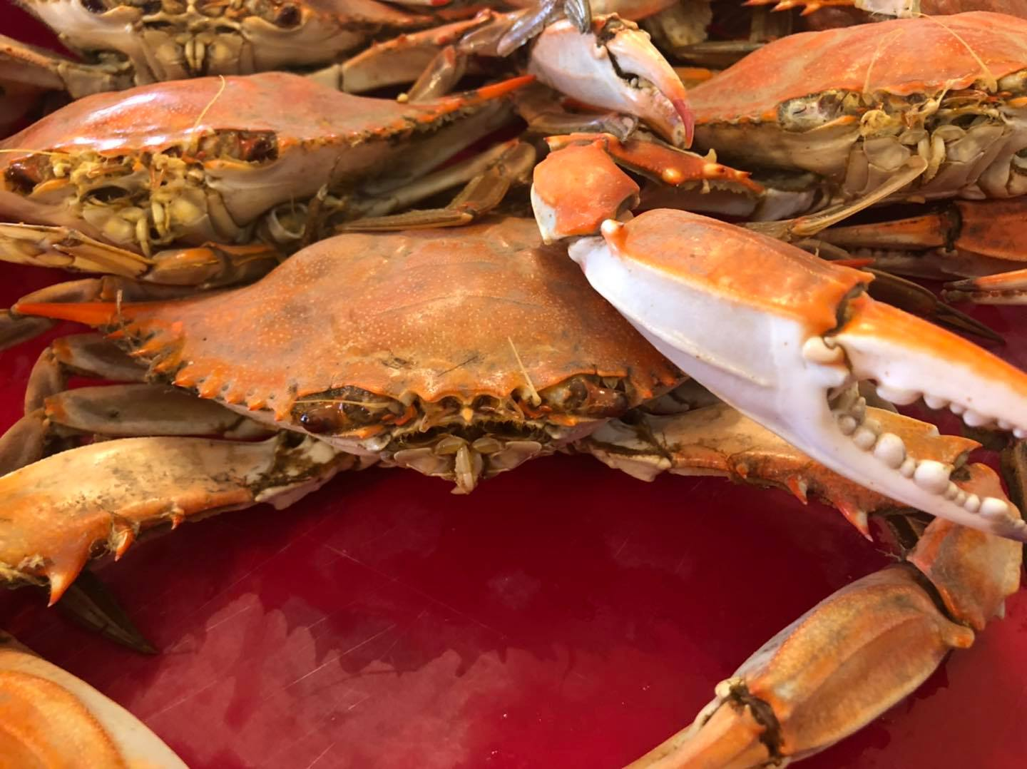 boiled crabs on a plate