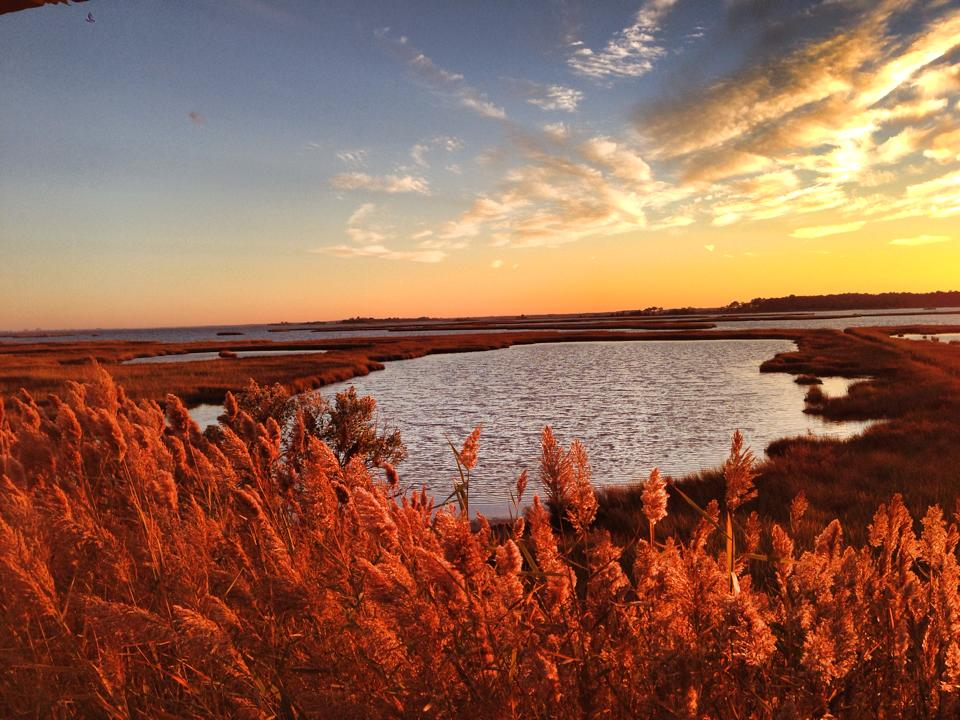 wetlands and sunset
