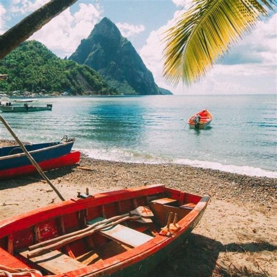beach with palm tree and kayaks on sand with mountains in background