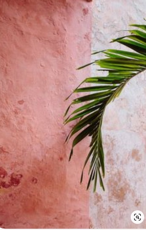 wall with palm tree leaf handing from the side
