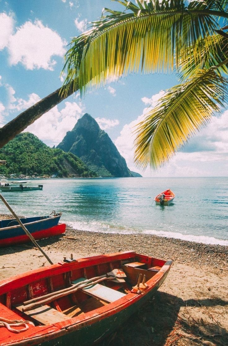 beach with palm tree and kayaks on sand with mountains in the background