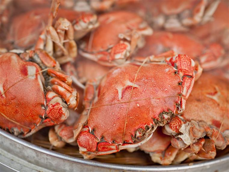steamed crabs in a pot