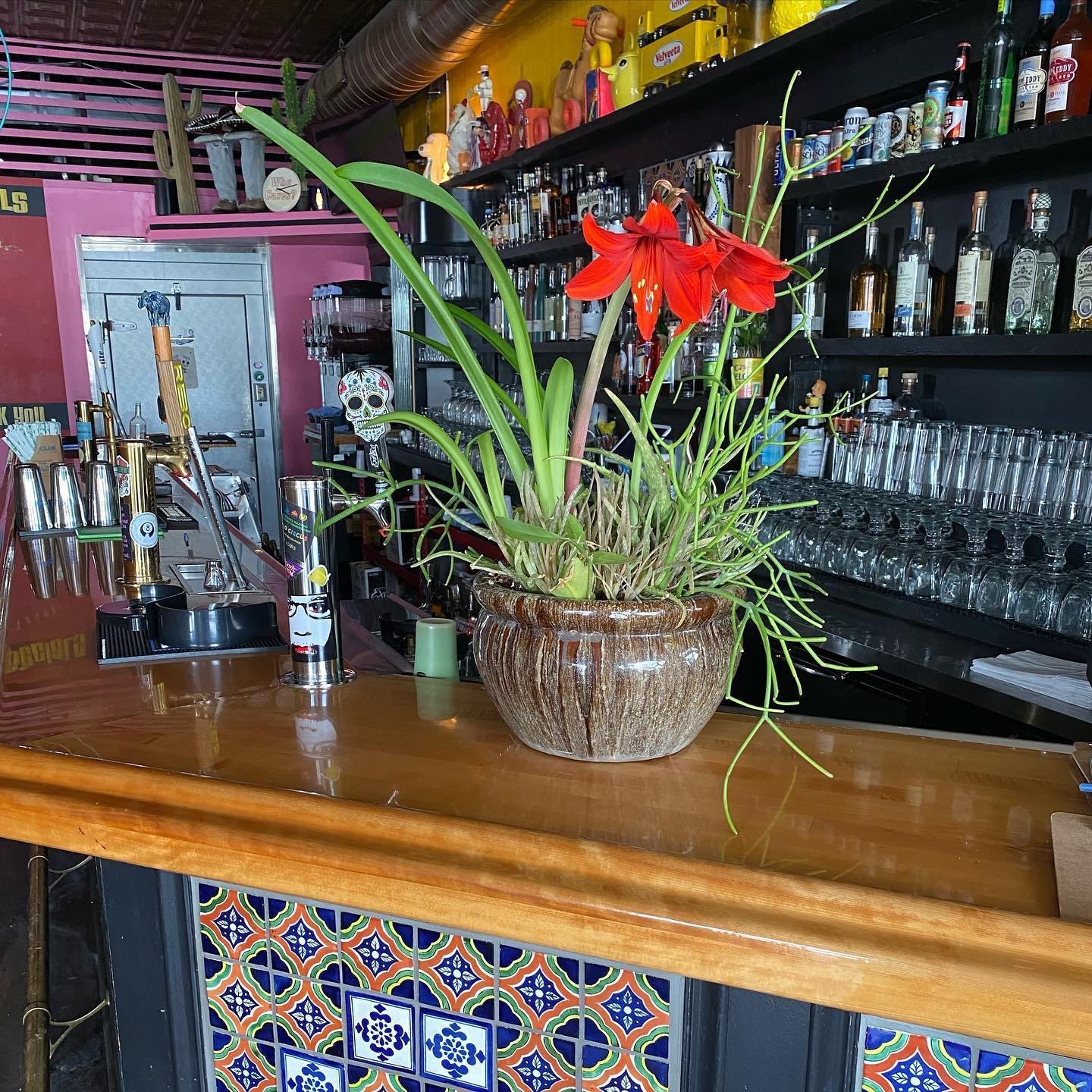 potted plant on the bar