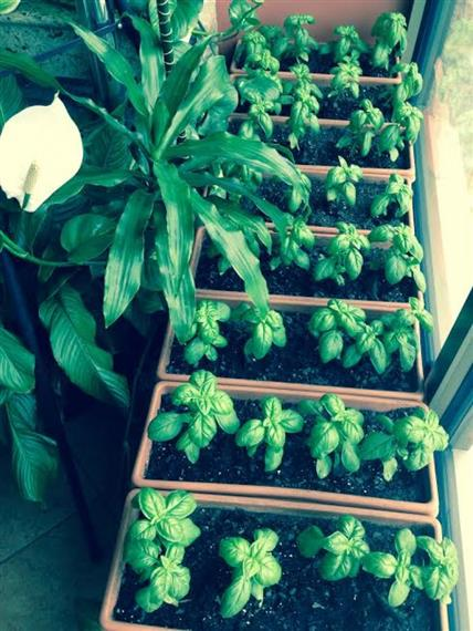 homegrown plants and garden