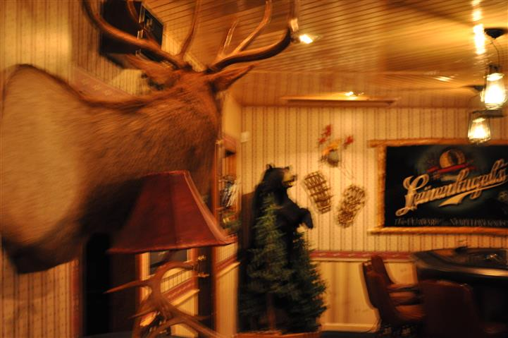 a moose head mounted on the wall