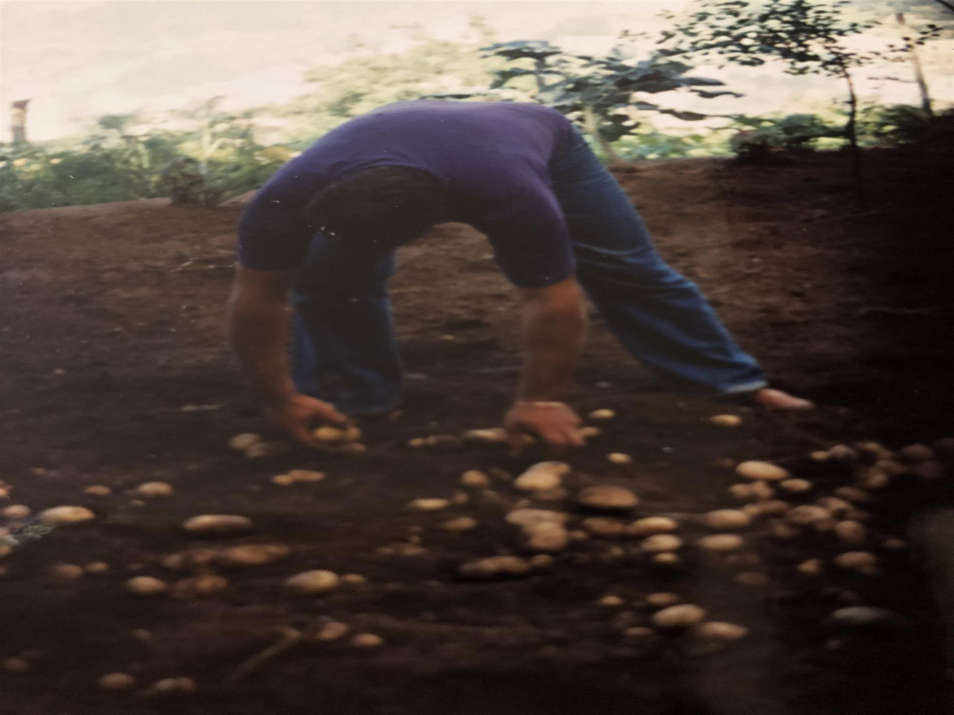 man picking mushrooms from the ground