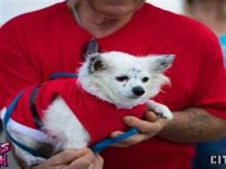 Man holding small dog in christmas sweater