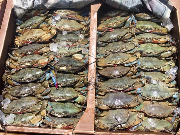 Fresh caught crabs in crate