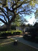 La Belle Isabel Live Oak